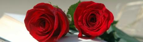 Roses i llibre