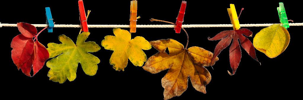 """""""hojas"""""""