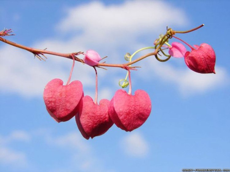 valentines-day-hearts