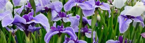 Flors de febrer